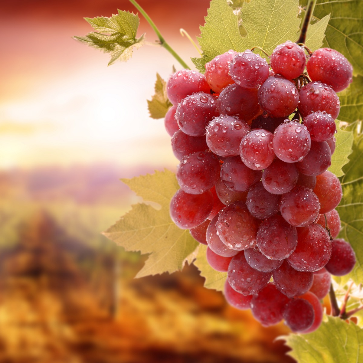 Beneficios do Resveratrol