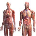 O cancro e os tumores cancerosos