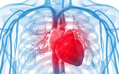 Reforçando o sistema cardiovascular