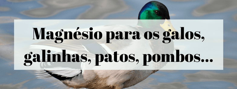 Magnésio para os galos, galinhas, patos, pombos, rolinhas