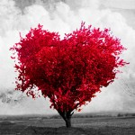 Um Amor